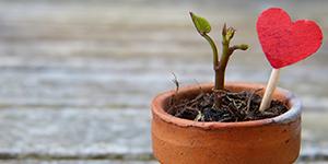 Planting Self-Love