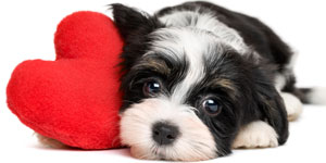 Valentine's Pet Photos
