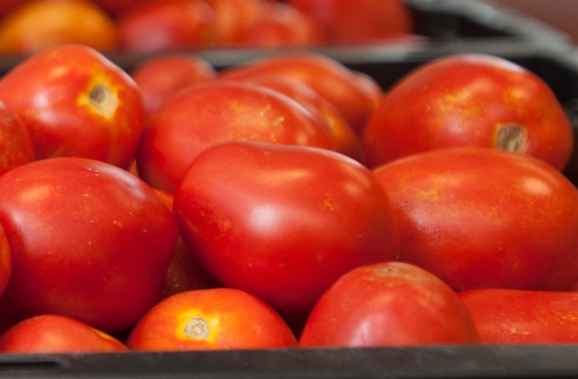 Processing Tomato Symposium