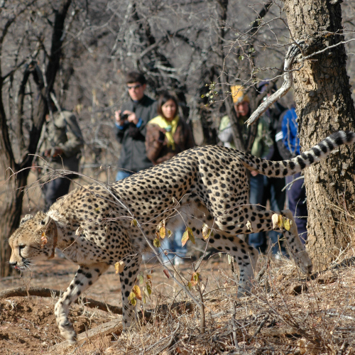 """Summer Abroad South Africa, """"City to Safari"""""""