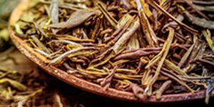Global Tea Initiative Symposium
