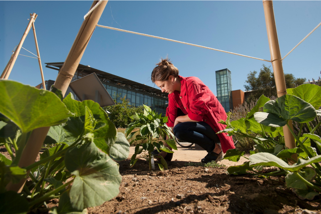 College of Agricultural and Environmental Sciences Information Session