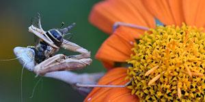 "STILL ON - Open House: ""Urban Entomology"""