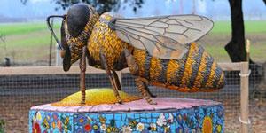 Honey Bee Haven Open House