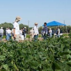 Dry Bean Field Day