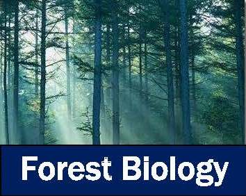 """Looking Backward to See Forward: Causes and Consequences of Altered Disturbance and Climate on Western Conifer Forests"" (Sarah Bisbing)"