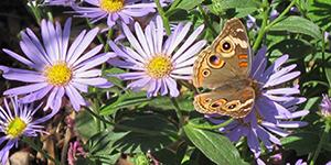 Pollinator Gardening