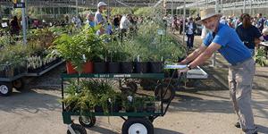 POSTPONED: Plant Sale